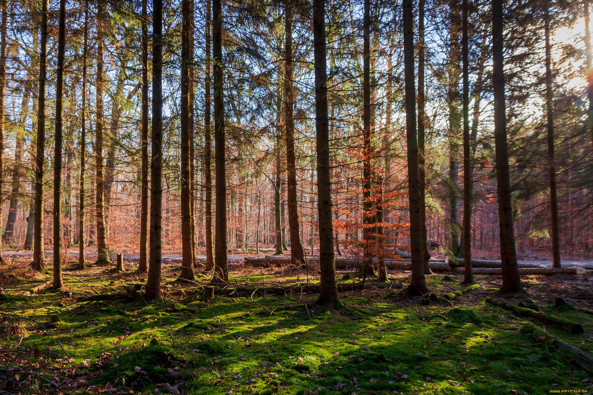 Картинки лесные просторы
